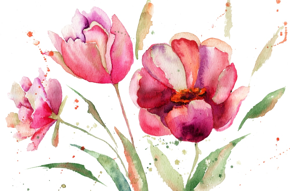 Watercolor painting of three pink tulips